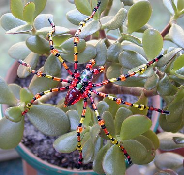 Beaded spider on jade plant